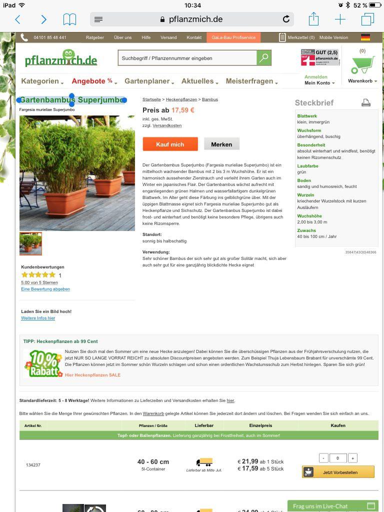 h nge goldglocke uvularia grandiflora g nstig online kaufen. Black Bedroom Furniture Sets. Home Design Ideas